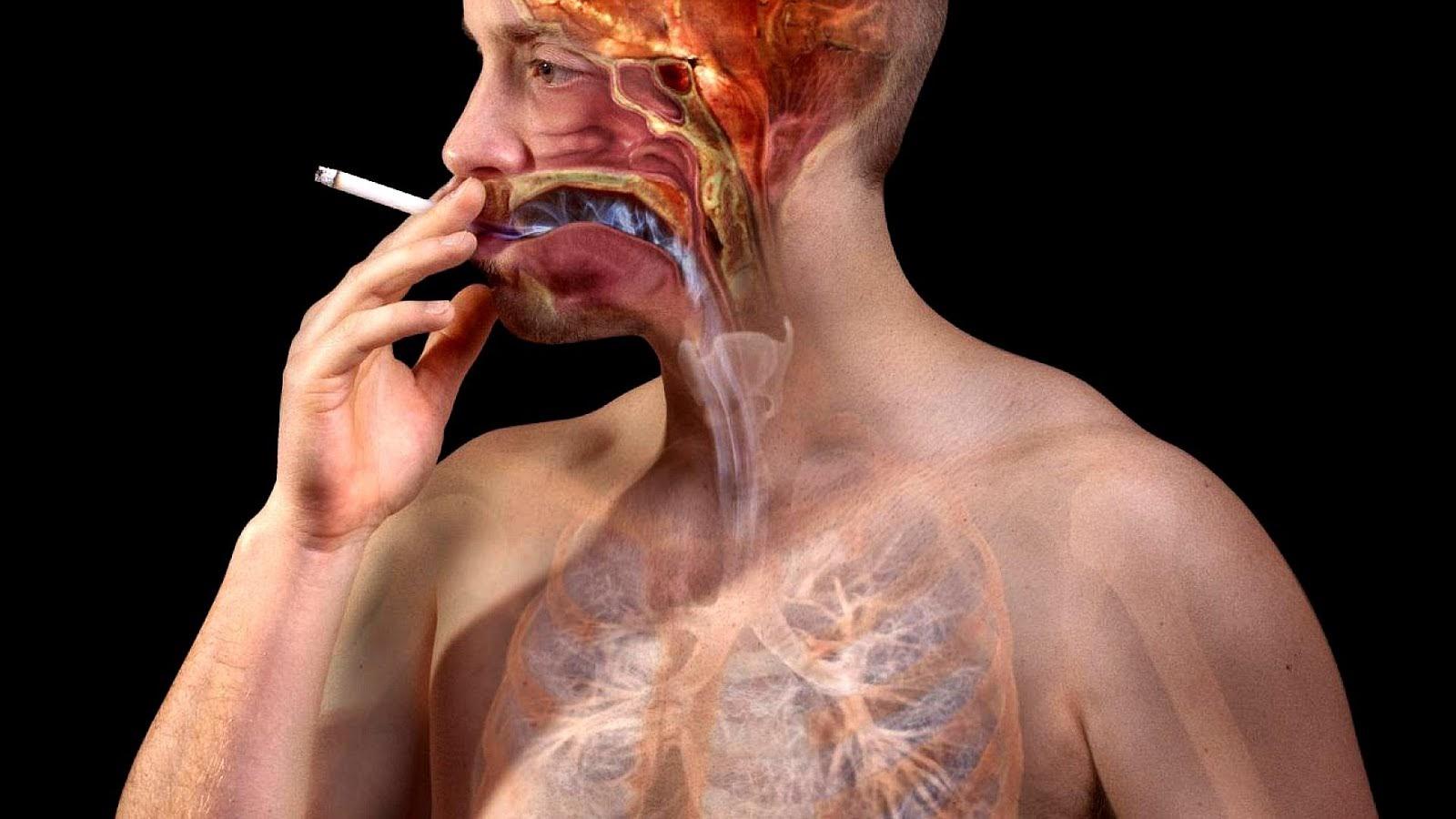 Сигареты негативно влияют на легкие, сердце, мозг, даже в небольшом количестве они вызывают отрицательные последствия в организме