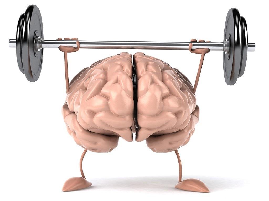 Мозг тренирует память