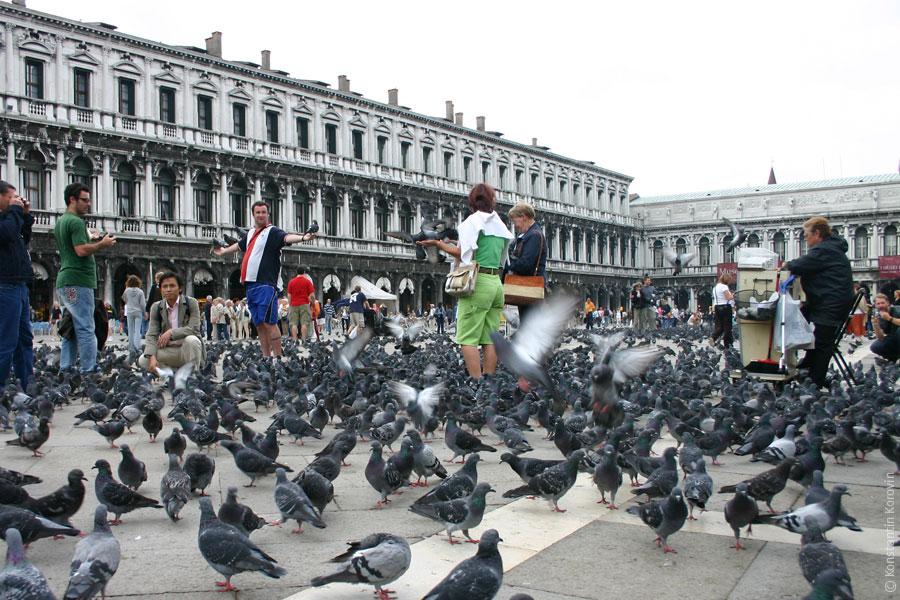 Скопление голубей
