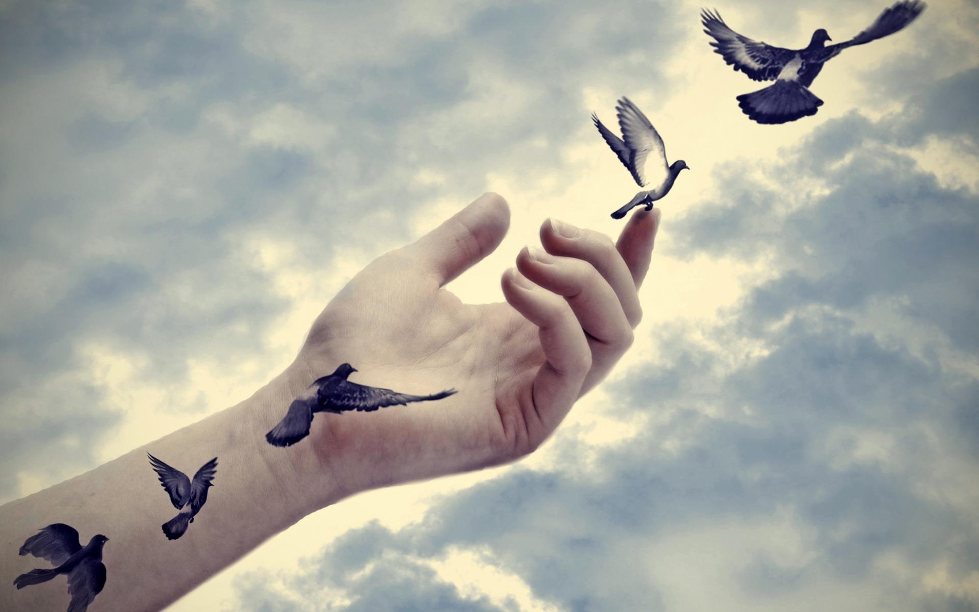 Птицы слетают с руки