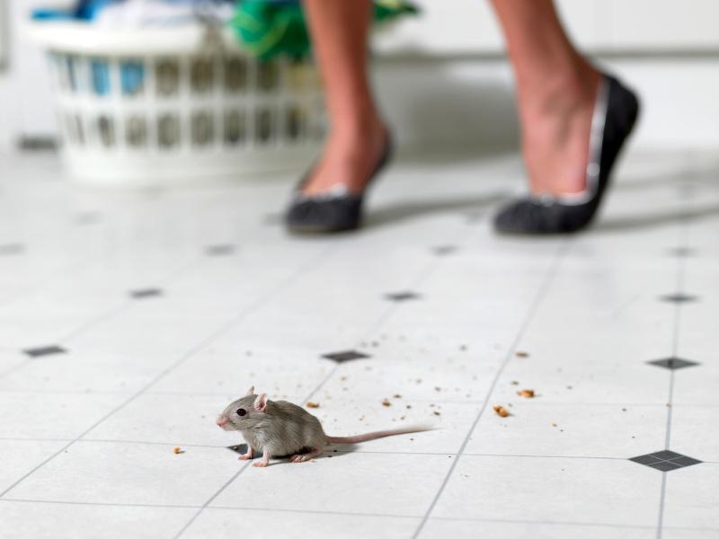 картинка боюсь крыс именно него выросли