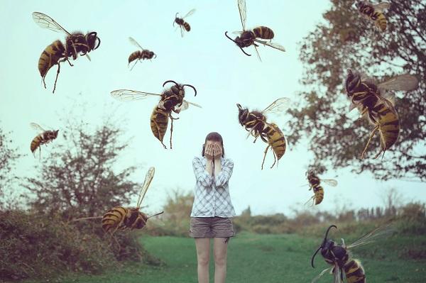 Боязнь пчел дезориентирует