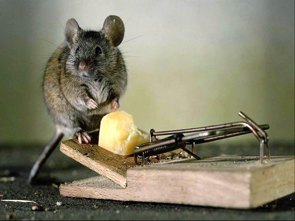Даже если мышка сидит и не собирается подходить, она все равно вызывает страх