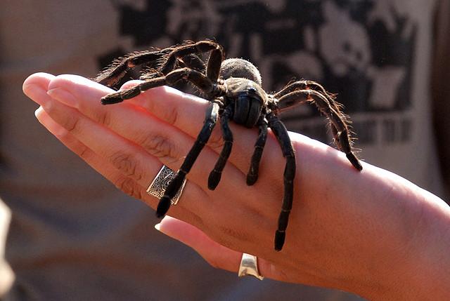 Большинство пауков безобидно