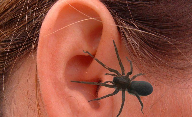 «Общение» с пауком