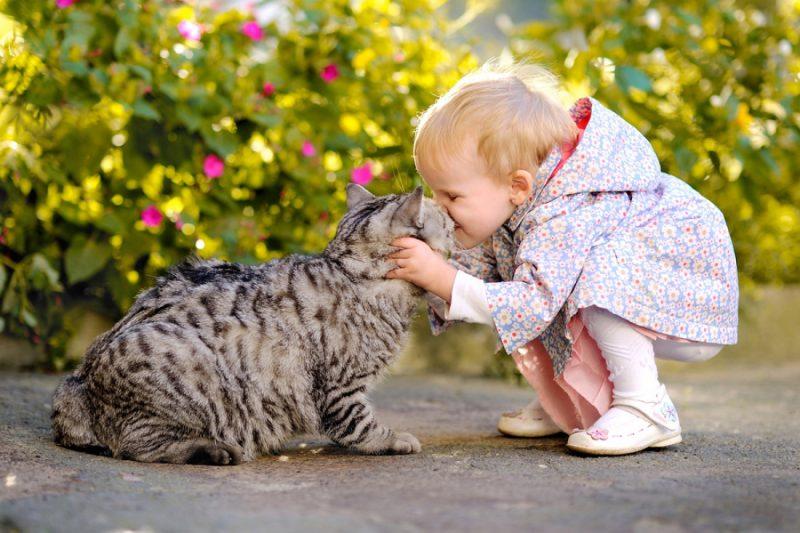 Добрый ребенок любит кота
