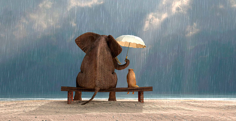 Добрый слон – пример моральности