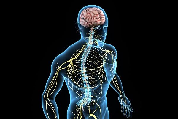 Степень выраженности невротизма зависит от врожденных особенностей нервной системы