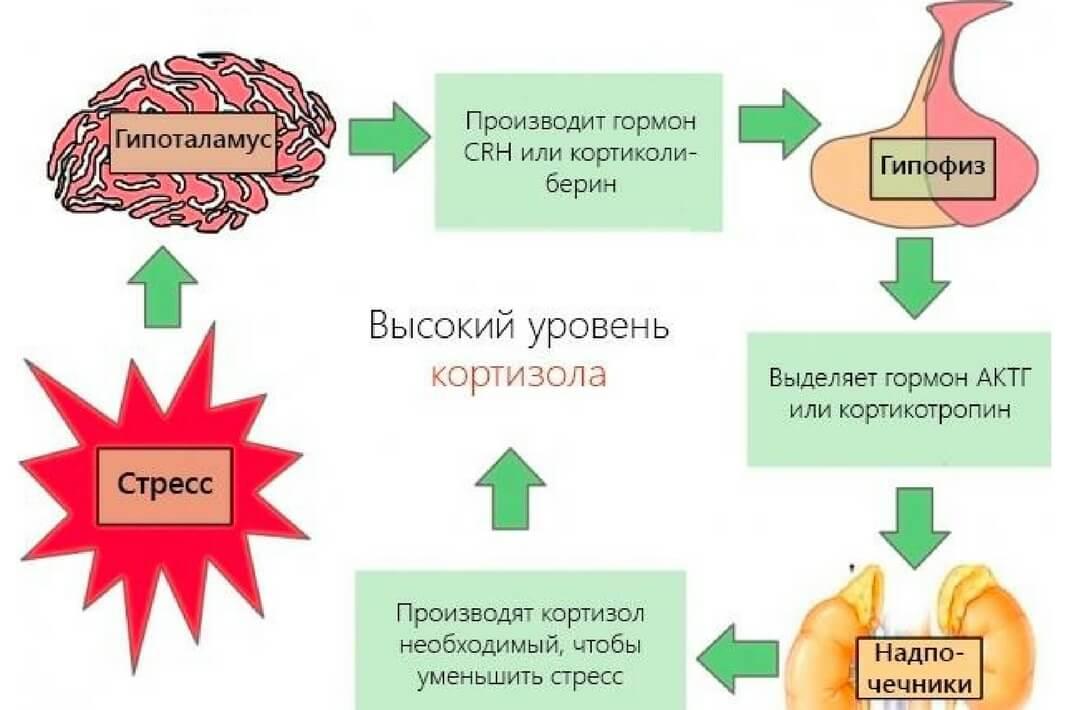 Взаимосвязь кортизола и стресса
