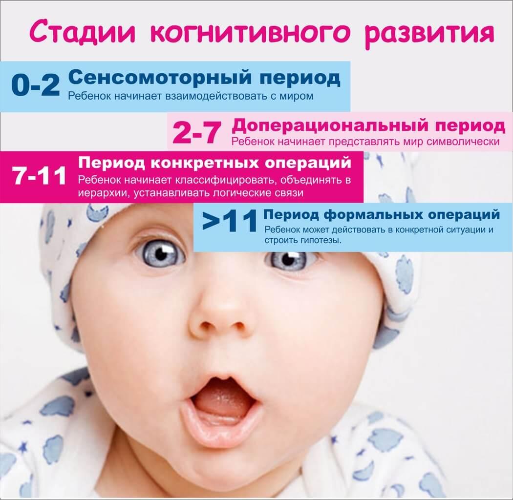 Стадии когнитивного развития ребенка