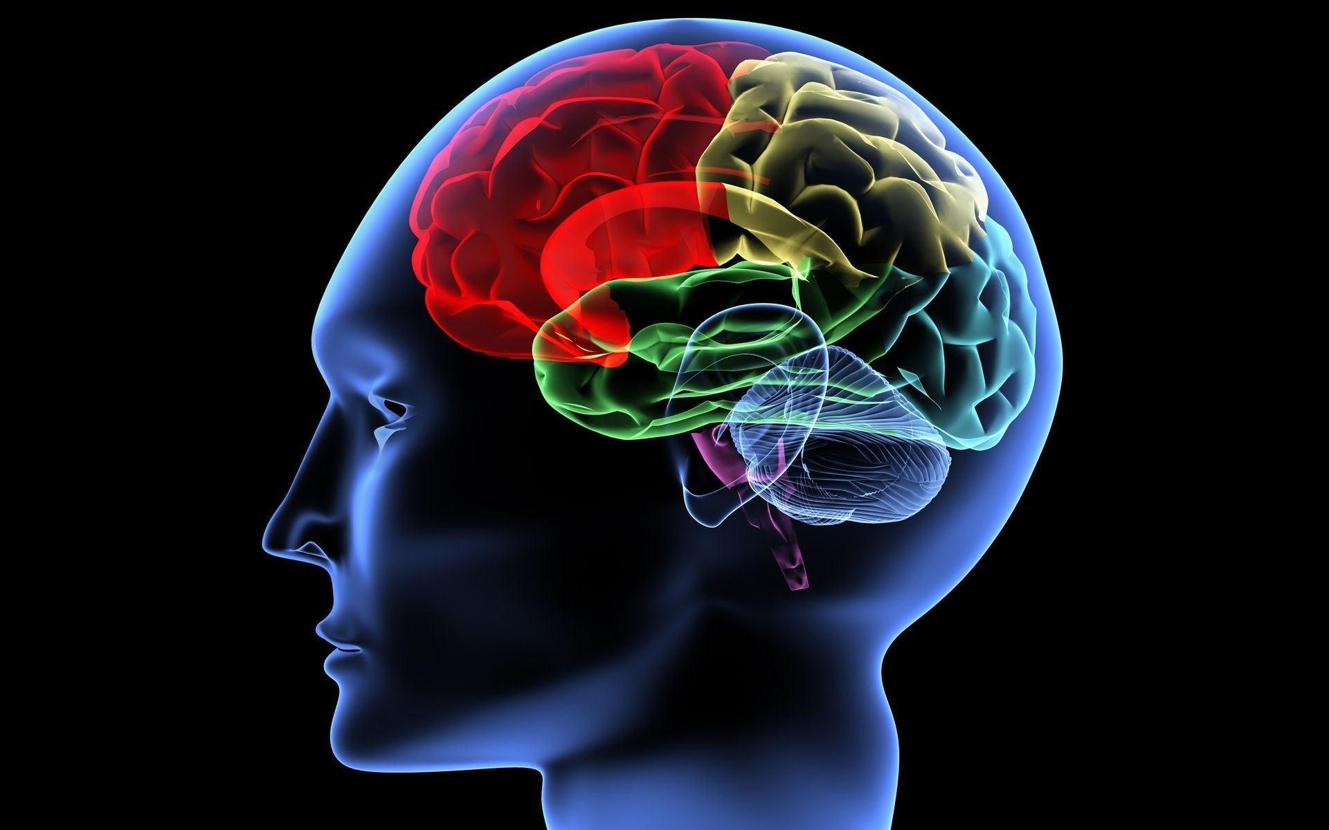 При погружении в гипнотический транс у человека меняется активность различных отделов мозга