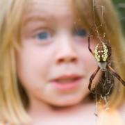 Даже в условиях города можно встретиться с насекомыми, поэтому такая фобия доставляет множество проблем